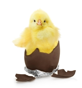 shutterstock_241773214 chick in chocolate egg Mar15