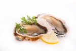 shutterstock_231423346 oysters May15