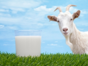 shutterstock_105191090 goats milk Aug15