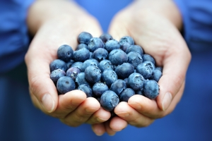shutterstock_193263086 blueberries Aug15