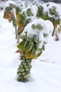shutterstock_175293266 sprout tree under snow Nov15
