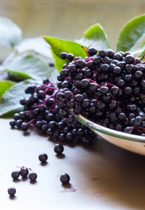 shutterstock_323937011 black elderberries in a bowl Dec15