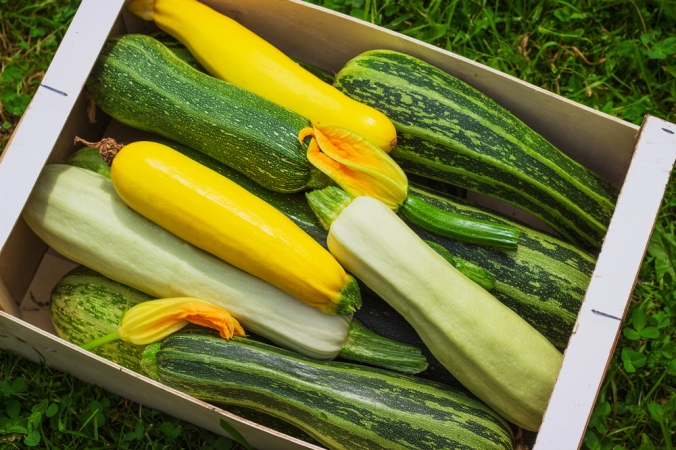 A range of courgettes