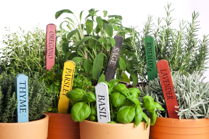 A range of fresh herbs in pots to add to cooking