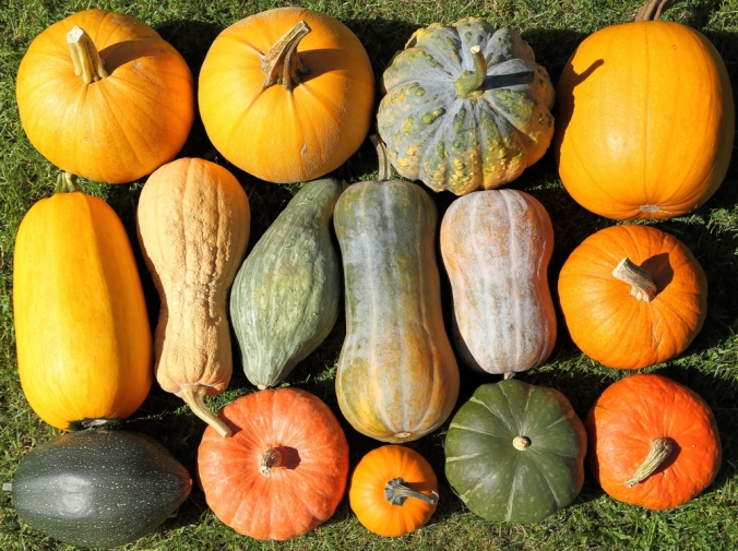 A range of pumpkins and squashes