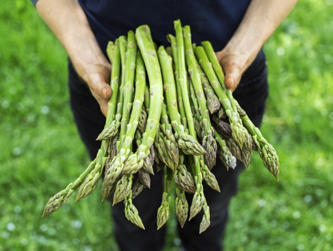 Close up of a woman holding a bunch of fresh asparagus
