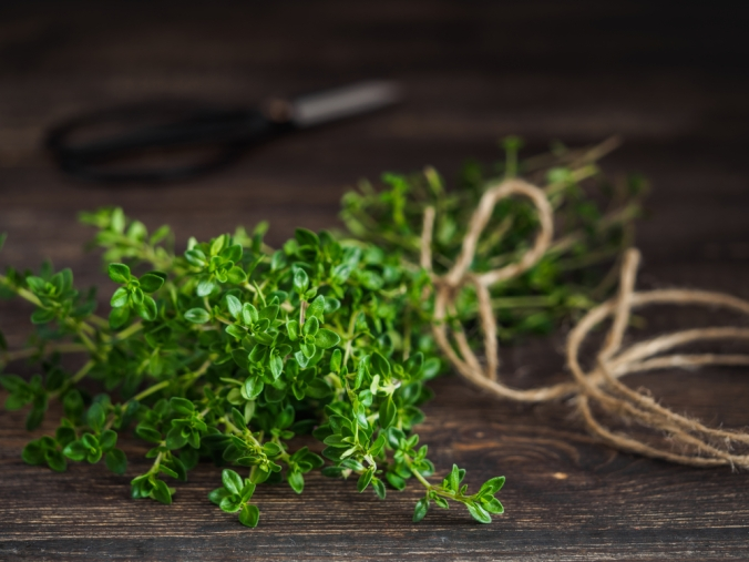 A fresh bunch of thyme