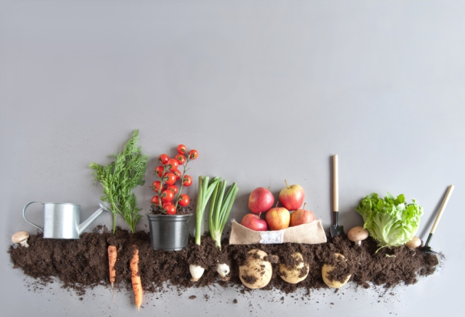 A photo of fruits and vegetables above soil to represent organic growing